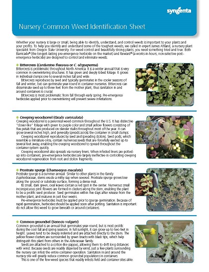 Nursery Common Weed Identification Sheet