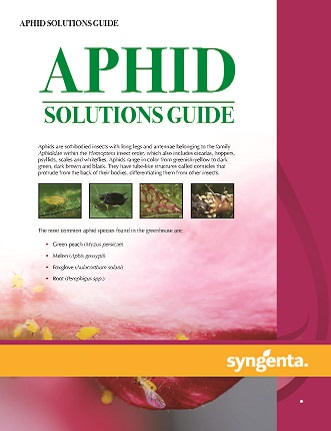 20188162018625163455_Aphids Solutions Guide.jpg PDF